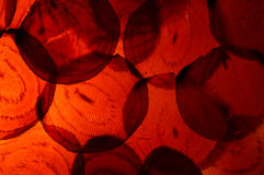 Macro Photo of Colorful Sliced Red Beets with Backlighting Royalty Free Stock Image