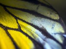 Macro photo d'une aile de papillon Photos libres de droits