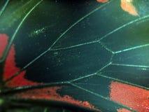 Macro photo d'une aile de papillon Photographie stock libre de droits