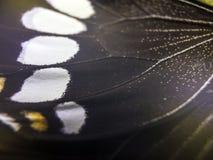 Macro photo d'une aile de papillon Photo stock