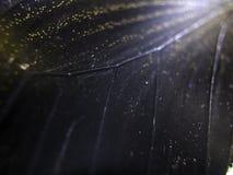 Macro photo d'une aile de papillon Photo libre de droits
