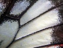 Macro photo d'une aile de papillon Image stock