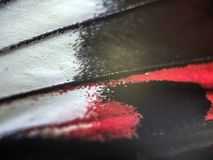 Macro photo d'une aile de papillon Images stock