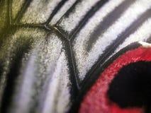 Macro photo d'une aile de papillon Image libre de droits