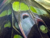 Macro photo d'une aile de papillon Images libres de droits