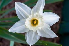 Macro photo d'une belle fleur blanche image libre de droits