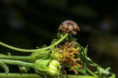 Macro photo de coccinelle dans l'herbe verte Photo libre de droits