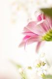 Macro photo de fleur Photographie stock