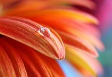 Macro photo de fleur Image libre de droits