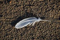 Macro photo de plume sur un sable images stock