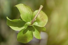 Macro photo de rapport optique extrême d'une fleur sauvage images stock