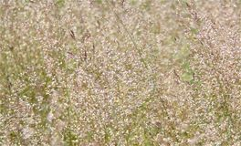 Macro photo with a decorative background grass Stock Photography
