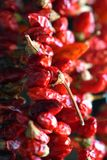 Dried hanging red chilli peppers royalty free stock photography
