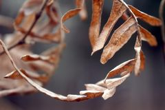 Macro photo of dry orange red brown leaf with small leaves in the shape of a circle stock photography
