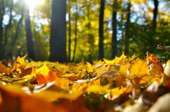 Macro photo of a fallen leaves Royalty Free Stock Photos