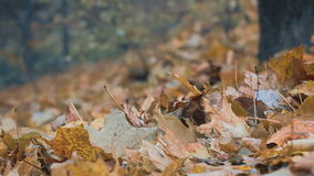 Macro photo of a fallen leaves in autumn forest stock video footage