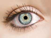 Macro photo of a female eye Stock Photos