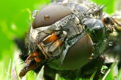 Macro photo a fly Stock Photos