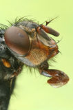 Macro photo a fly Stock Photo