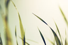 Macro photo of fresh grass. retro filtered image Royalty Free Stock Image