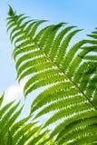Macro photo of fresh green fern leaf Stock Photos