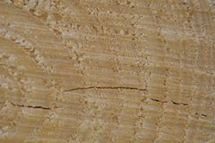 A macro photo of a freshly cut tree, showing texture of the wood. Soft warm colours of the wood and fine details of its structure. Macro; close-up; structure stock images