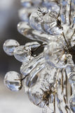 Macro photo of frozen meadow flowers engulfed in ice Royalty Free Stock Photo