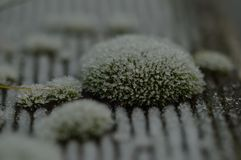 Frozen moss on wood. A macro photo of frozen moss on wood Royalty Free Stock Photo
