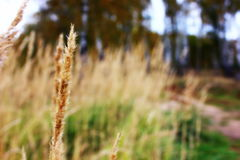 Macro photo of grass Royalty Free Stock Photography