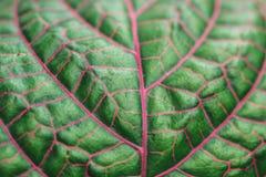 Macro photo green leaf royalty free stock photo
