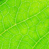 Macro photo of green leaf Stock Photo
