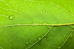 Macro photo of green leaf with water drops Stock Photos