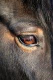 Macro photo of a horse Stock Image