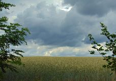 Macro photo of a landscape with a decorative backdrop of rural fields of grain of plants. With the atmosphere of the approaching storm as the source for design royalty free stock photos