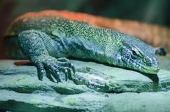 Macro photo large lizard Stock Photo