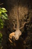 Macro photo large lizard Stock Images