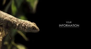 Macro photo of a large lizard in the nursery royalty free stock photo