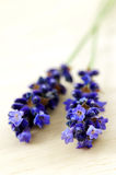 Macro photo of lavender Royalty Free Stock Images