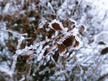 Macro photo. Of a leaf with hoarfrost winter Royalty Free Stock Images
