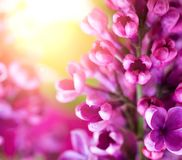Macro photo of lilac flowers on a background of sunlight stock images