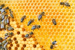 Free Macro Photo Of A Bee Hive On A Honeycomb With Copyspace. Bees Produce Fresh, Healthy, Honey. Stock Photography - 166634422