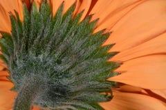 Bright closeup daisy flower royalty free stock photos