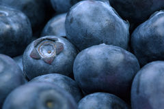 Macro photo of organic and sweet blueberries as a background. Healthful and fresh berries for desserts or smoothies. Close-up picture of a lot of natural and royalty free stock photo