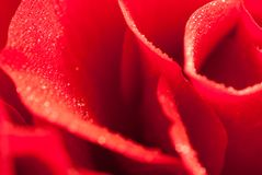Macro photo of red rose petals with water drops Royalty Free Stock Photos