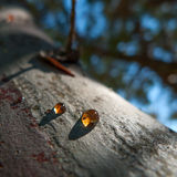 Resin on the body of a tree Royalty Free Stock Photography
