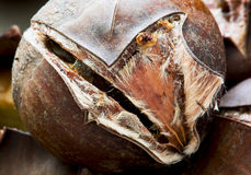 Macro photo of roasted chestnut Royalty Free Stock Photography