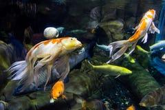 Macro photo of several beauty fish stock photography