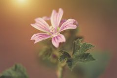 Macro photo of small flower at sunset Stock Photos