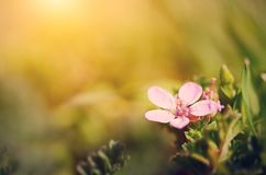 Macro photo of a small purple wildflower. A sunny day Stock Photo