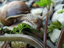 Macro photo of snail in green grass Royalty Free Stock Photography